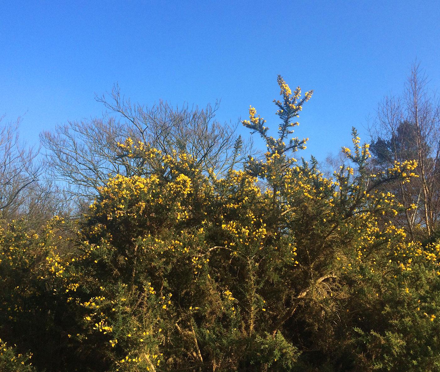 Croydon Addington Hills heathland