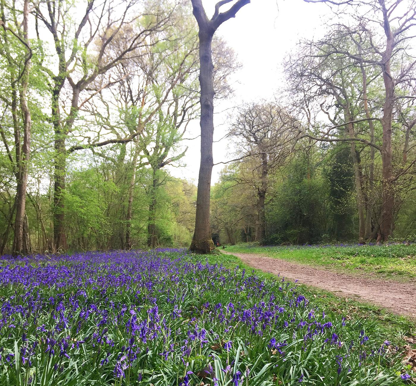 Kings Wood, Sanderstead