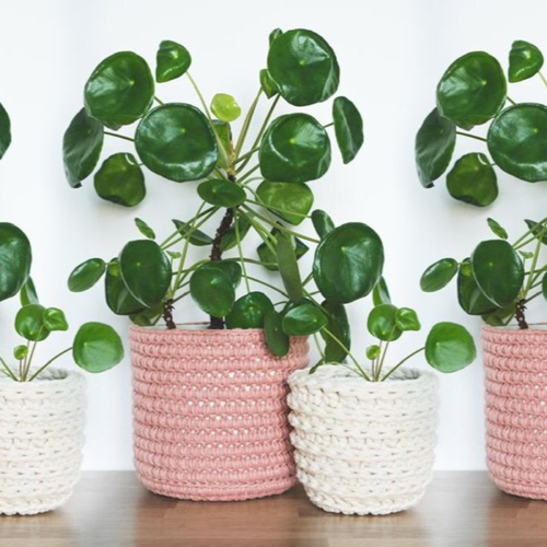 Eco-chic for plants